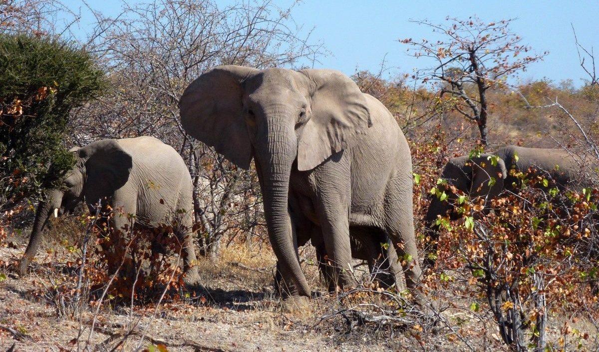 Ontmoeting met olifanten